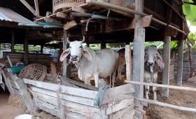 23 февраля 2015. Тайланд, Рой Ет