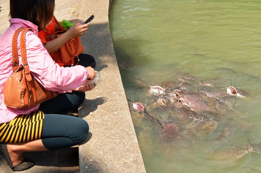 24 февраля 2015. Тайланд, Рой Ет