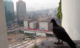 14 марта 2016. Малайзия, Куала Лумпур.