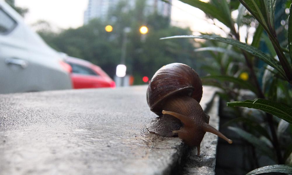 4 июня 2016. Малайзия, Куала Лумпур.