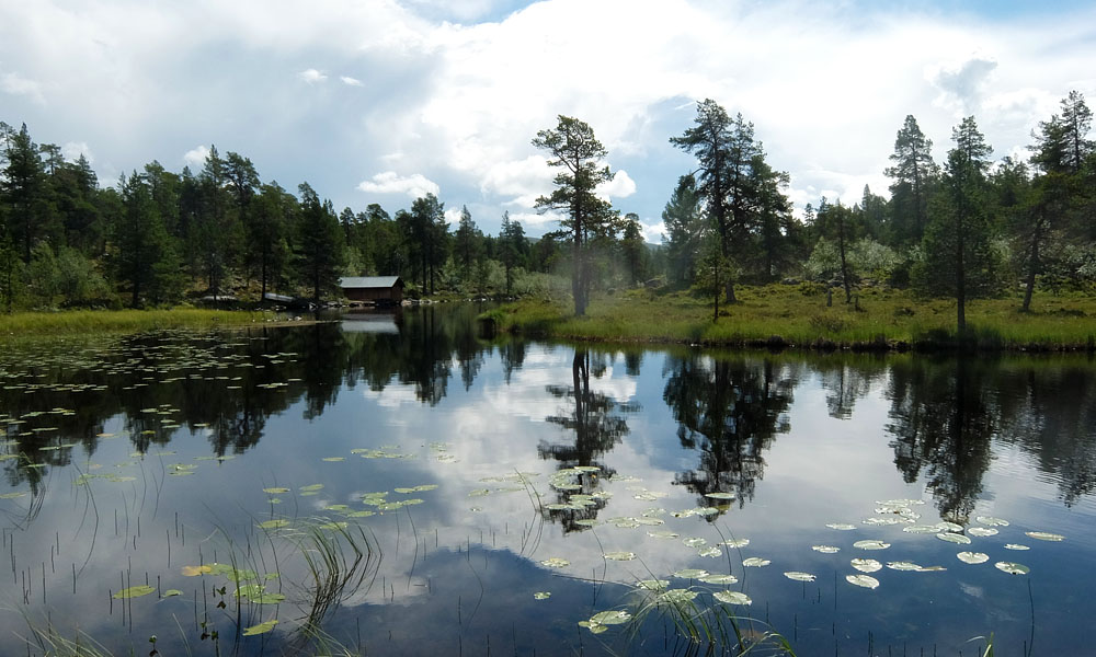24 июля 2016. Швеция, Ругенский заповедник.