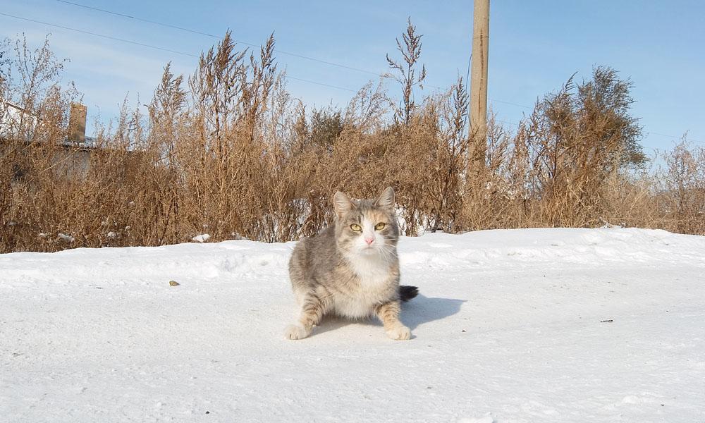 27 октября 2016. Казахстан, Караганда.