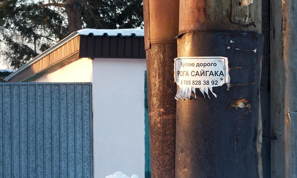 14 февраля 2017. Казахстан, Караганда.