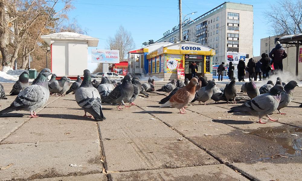 23 февраля 2017. Казахстан, Караганда.