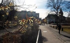15 марта 2017. Швеция, Вестерос.