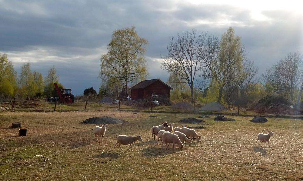 11 мая 2017. Швеция, Брукследен.