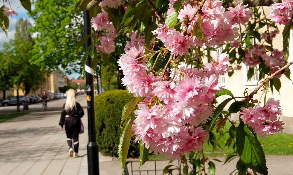 22 мая 2017. Швеция, Вестерос.