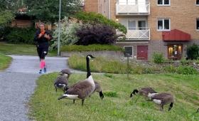 8 июля 2017. Швеция, Вестерос.