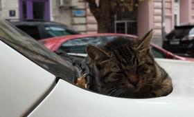 14 ноября 2017. Грузия, Тбилиси.